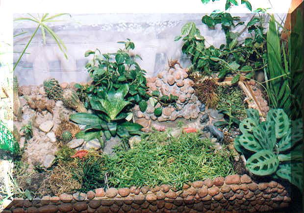 Диффенбахия Уход в домашних условиях фото видов
